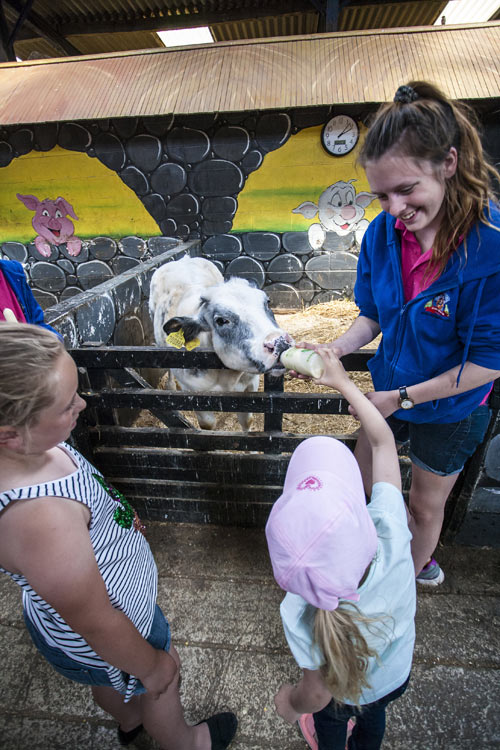 Bottle Feeding the Animals at Tweddle Farm