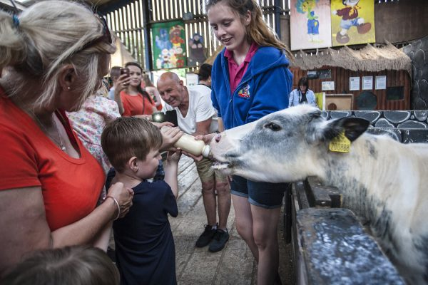 Bottle Feeding at Tweddle Farm