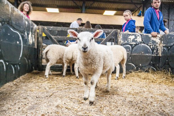 Tweddle Farm Petting Centre
