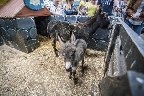 Tweddle Farm Petting Centre
